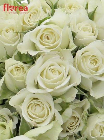 Kytice 100+ květů růží ROSA SNOWFLAKE