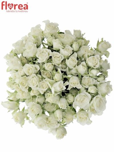 Kytice 100+ květů růží SNOWFLAKE 50cm