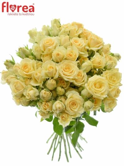 Kytice 100+ květů růží SALINERO 50cm