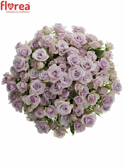 Kytice 100+ květů růží SILVER SHADOW 50cm