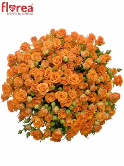 Kytice 100+ květů růží SMASHING 40cm