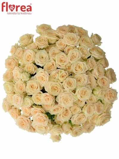 Kytice 100+ květů růží TANJA 40cm