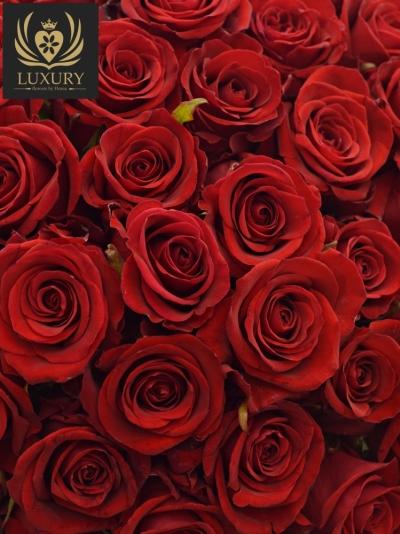 Kytice 100 luxusních růží RED EAGLE