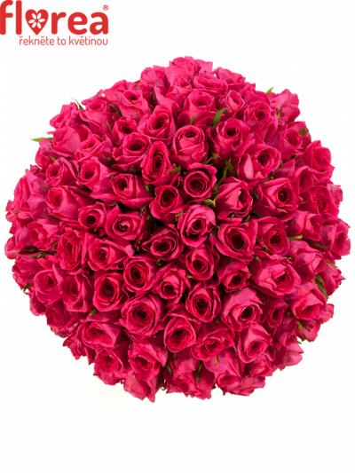 Kytice 100 malinových růží ADAMMA 40cm