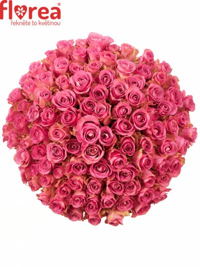 Kytice 100 růžových růží ROYAL JEWEL 40cm