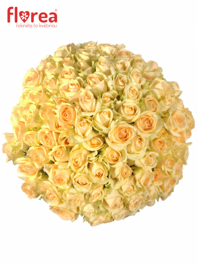 Kytice 100 meruňkových růží MAGIC AVALANCHE 50cm (M)