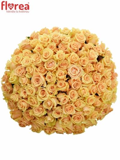 Kytice 100 meruňkových růží PRIMA DONNA 50cm