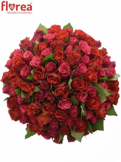 Kytice 100 míchaných růží DERRIE 40cm
