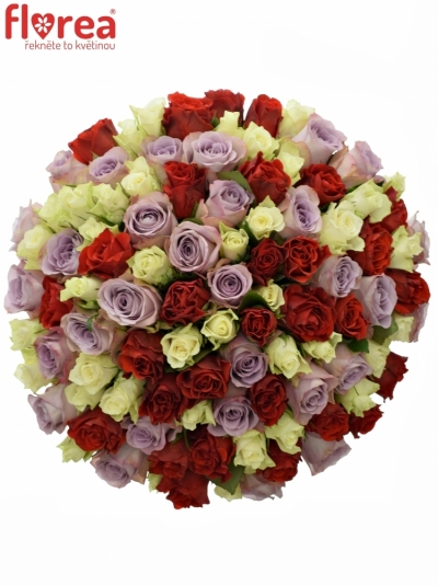 Kytice 100 míchaných růží DESIRÉE 40cm