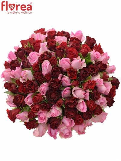 Kytice 100 míchaných růží DEVANIE 35cm