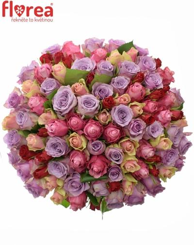 Kytice 100 míchaných růží DOLORES 35cm