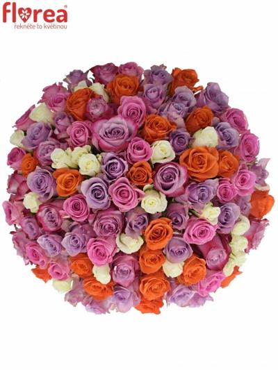 Kytice 100 míchaných růží DOLORRES 35cm
