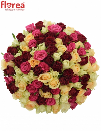 Kytice 100 míchaných růží AMALGITH
