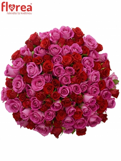 Kytice 100 míchaných růží ARRISA 50cm