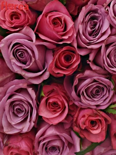 Kytice 100 míchaných růží BENAYA