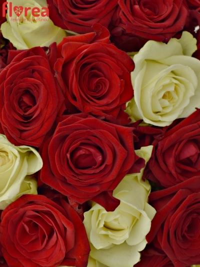 Kytice 100 míchaných růží CHRISTELLE 55cm