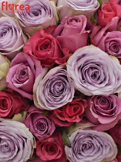 Kytice 100 míchaných růží DARIELLA 35cm