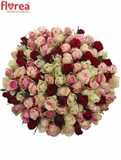 Kytice 100 míchaných růží EBIGALE 50cm