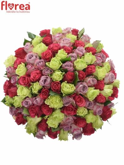 Kytice 100 míchaných růží FRANCESCA 40cm