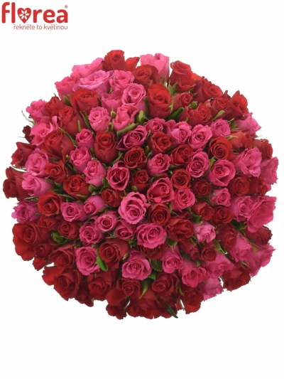 Kytice 100 míchaných růží GRACIANA 35cm
