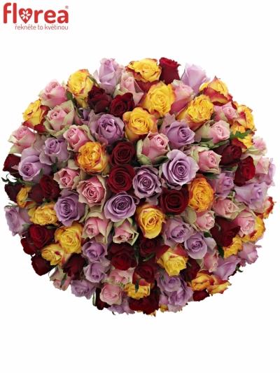 Kytice 100 míchaných růží MIRIAM 50cm