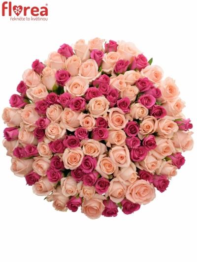 Kytice 100 míchaných růží PINACHE 35cm