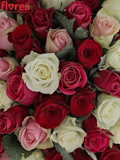 Kytice 100 míchaných růží RADWAN 40cm