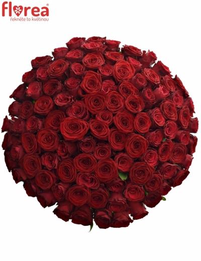 Kytice 100 míchaných růží REDOS 50cm
