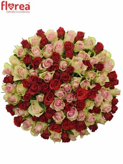 Kytice 100 míchaných růží ROSEBELLINE 35cm