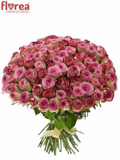 Kytice 100 míchaných růží TIMESTELLE