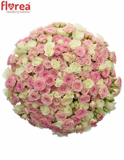 Kytice 100 míchaných růží TWISTER 40cm