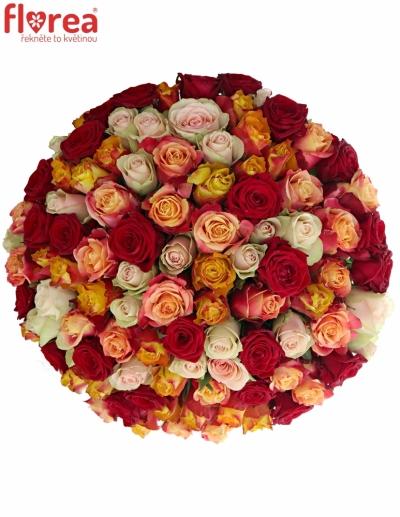 Kytice 100 míchaých růží PITTHEUS 70cm