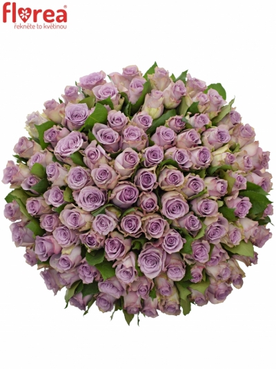 Kytice 100 modrofialových růží DANCING CLOUDS! 40cm