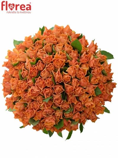 Kytice 100 oranžových růží ARANCIO 70cm