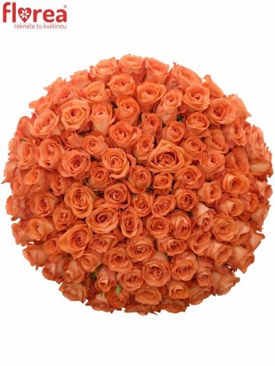 Kytice 100 oranžových růží COPACABANA 50cm