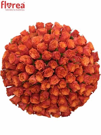 Kytice 100 oranžových růží DEVOTED 50cm