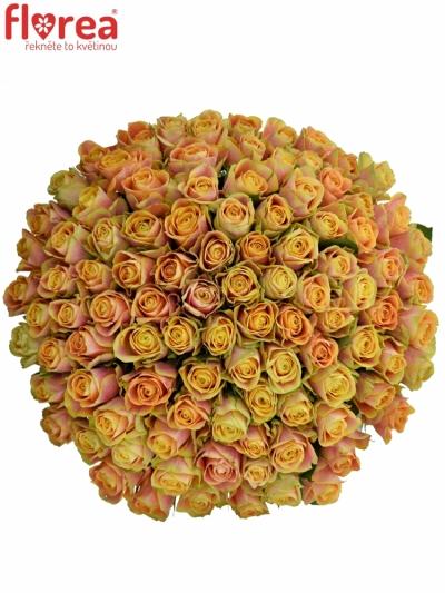 Kytice 100 oranžových růží MARACUJA 60cm