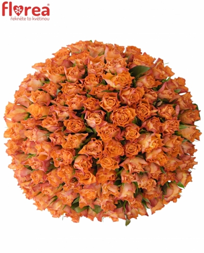 Kytice 100 oranžových růží MARIYO! 40cm