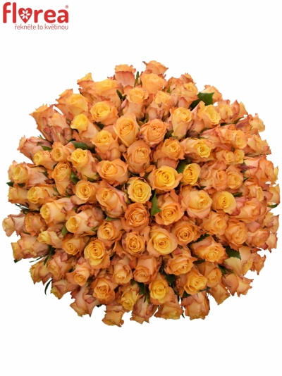 Kytice 100 oranžových růží MONALISA 40cm