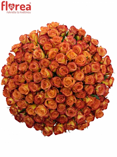 Kytice 100 oranžových růží OUTLAW! 50cm