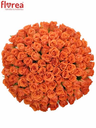 Kytice 100 oranžových růží PATZ 60cm