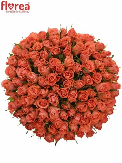 Kytice 100 oranžových růží SIMBA 50cm