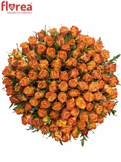Kytice 100 oranžových růží SOMBRERO 60cm