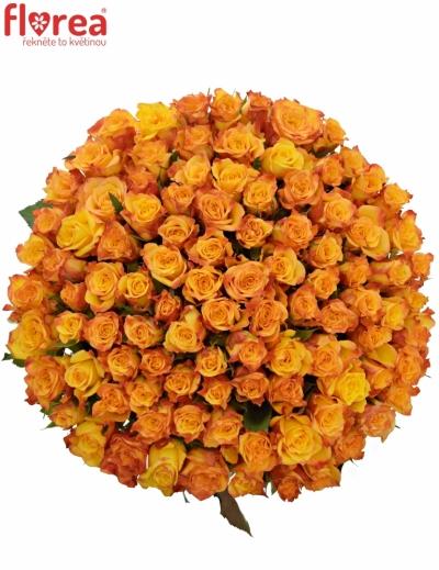 Kytice 100 oranžových růží TIEBREAK 60cm