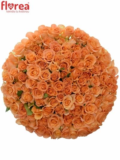 Kytice 100 oranžových růží TRIXX! 50cm