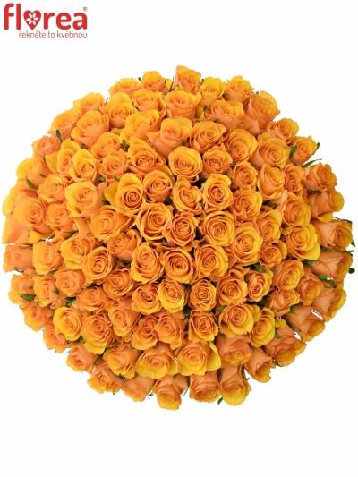 Kytice 100 oranžových růží TYCOON 50cm