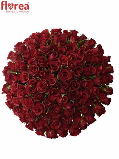 Kytice 100 rudých růží BURGUNDY 50cm
