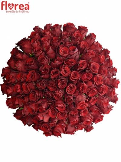 Kytice 100 rudých růží EXPLORER 60cm