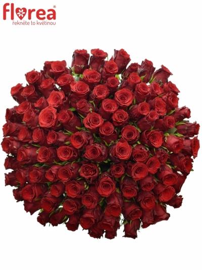 Kytice 100 rudých růží INCREDIBLE 60cm