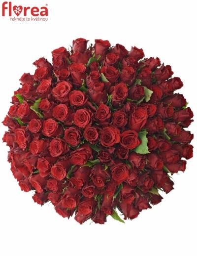 Kytice 100 rudých růží RED TORCH 50cm